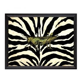 Obraz s rámom - lúčny koník - veľký
