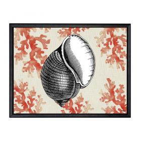 Picture with frame - Sea shell - Small