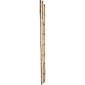 Dlhé bambusové tyčky
